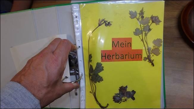 mpg wie muss ein herbarium aussehen rue25 notizen. Black Bedroom Furniture Sets. Home Design Ideas