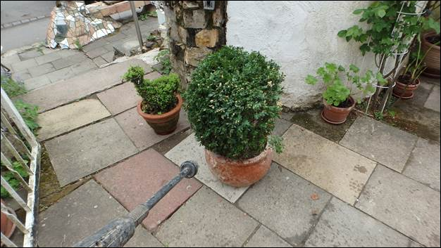 buchsbaum befall in n rtingen stuttgart vom buchsbaumz nsler rue25 notizen. Black Bedroom Furniture Sets. Home Design Ideas