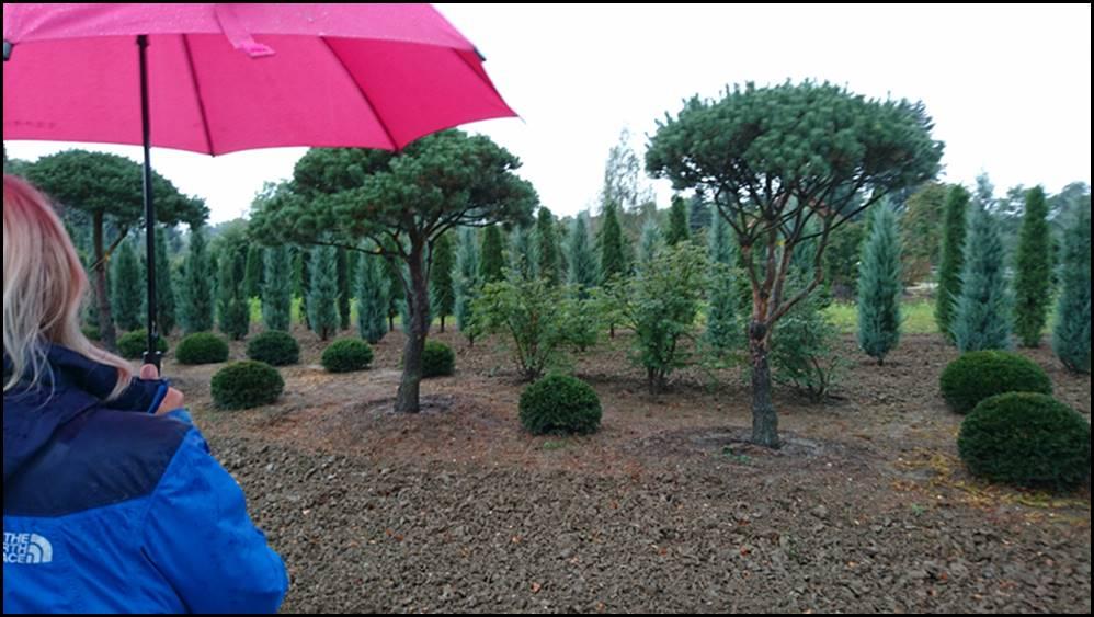N rtingen firmen gartenbau landschaftsbau und for Garten und landschaftsbau firmen