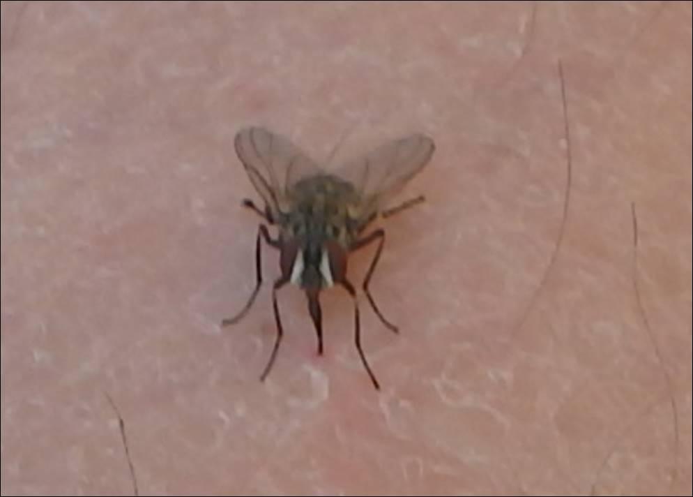 Mücke Die Beißt