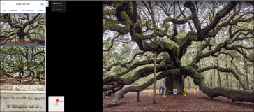 Angel Oak Tree in South Carolina Charleston